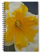 Narcissus 014-1 Spiral Notebook