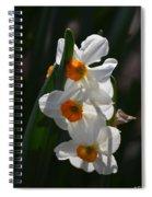 Narcissus Evening Glow Spiral Notebook