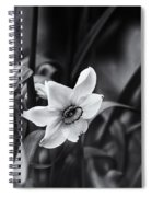 Narcissus In The Shadows Spiral Notebook