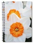 Narcissus Parkdene #2 Spiral Notebook