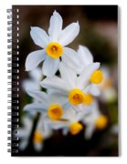 Narcissus Tazetta Spiral Notebook