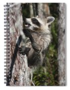 Nasty Raccoon In A Tree Spiral Notebook