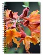 Native Flame Azalea I Spiral Notebook