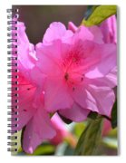Native Roseshell Azalea Spiral Notebook