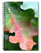 Natural Oak Leaf Abstract Spiral Notebook