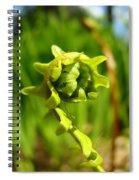 Nature Green Fern Frond Unfolding Art Prints Ferns Spiral Notebook