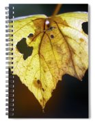 Nature Recycles Spiral Notebook