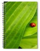 Naturellement Complementaire Spiral Notebook