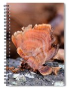 Nature's Abstract 4 Spiral Notebook
