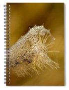 Nature's Candy Spiral Notebook