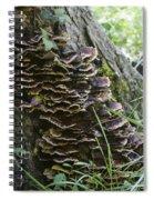 Nature's Castles Spiral Notebook