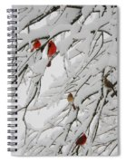 Nature's Christmas Ornaments Spiral Notebook