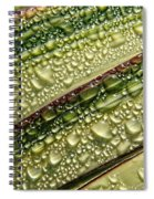 Nature's Colours Spiral Notebook