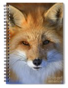 Nature's Eyes Spiral Notebook
