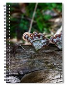 Natures Fantasy Fans Spiral Notebook