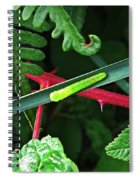Nature's Highway Spiral Notebook