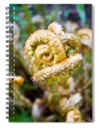Natures Knot-how To Twist Spiral Notebook