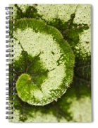 Natures Spiral Spiral Notebook