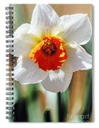 Nature's Sun Spiral Notebook