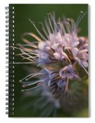 Natures Treasures Spiral Notebook