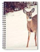 Natures Winter Visit Spiral Notebook