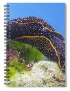 Navanax Inermis Spiral Notebook