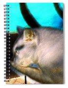 Negative Cat Spiral Notebook