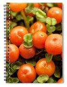 Nertera Granadensis Spiral Notebook