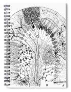 Nerve Cells, 1894 Spiral Notebook