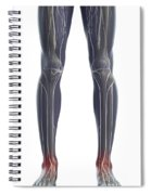 Nerves Of The Legs Spiral Notebook