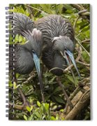 Nest Building Spiral Notebook
