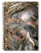 Nest Of American Robins Spiral Notebook
