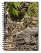 Nesting Brown Pelicans Spiral Notebook