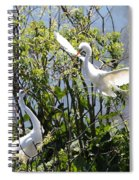 Nesting Great Egrets Spiral Notebook
