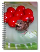 Nestling And Red Eggs Spiral Notebook