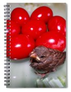 Nestling In A Plate Spiral Notebook
