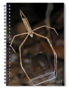 Net-casting Spider Spiral Notebook