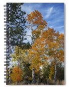 Nevada Fall Colors Spiral Notebook