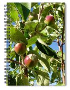 New Apples Spiral Notebook