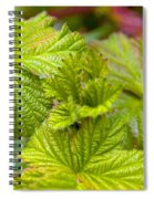 New Black Berry Leaves Spiral Notebook