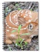 New Born Fawn Spiral Notebook