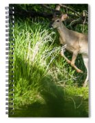 New Buck Spiral Notebook