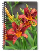 New Daylilies Spiral Notebook