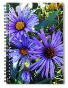 New England Aster Spiral Notebook