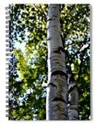 New England Birch Spiral Notebook