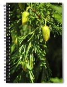 New Growth 25848 Spiral Notebook