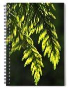 New Growth 25859 Spiral Notebook