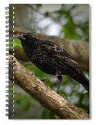 Red Winged Blackbird - New Heights - 06.04.2014 Spiral Notebook