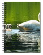 New Mute Swan Family In May Spiral Notebook