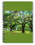 New Orleans City Park - Live Oak Spiral Notebook
